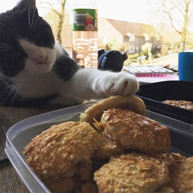 черно-белый кот и печенье
