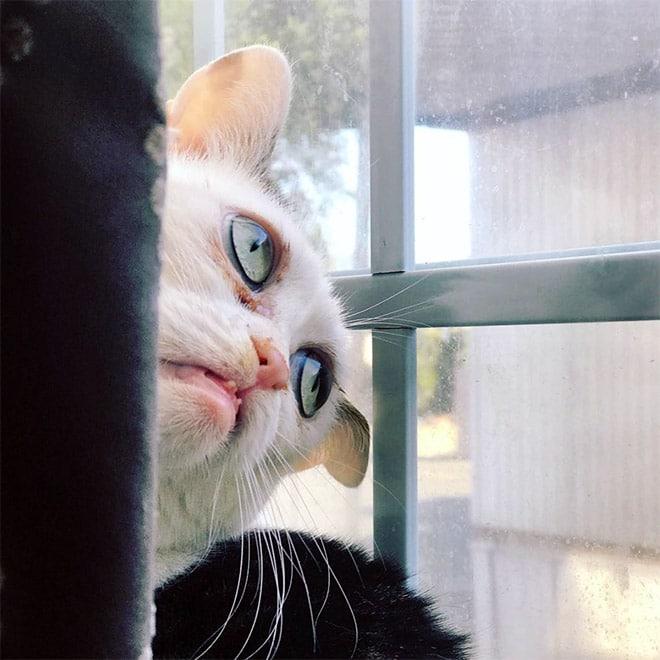 кошка марла фото