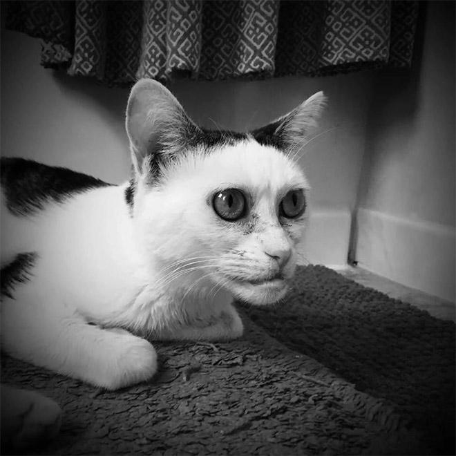 кошка бушеми фото