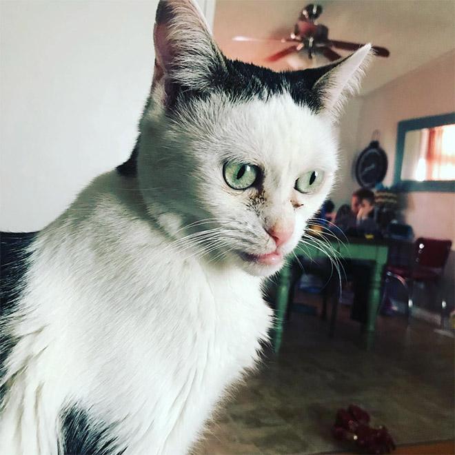 кошка бушеми