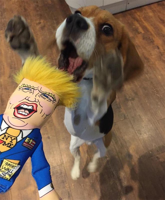 игрушечный дональд трамп и собака