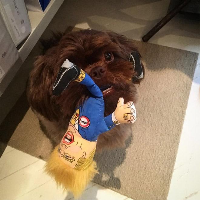 собака жует куклу