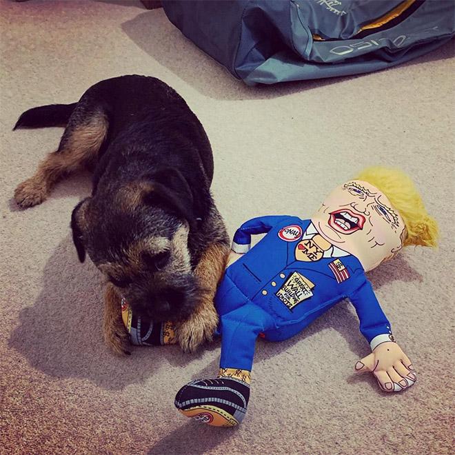 собака грызет куклу