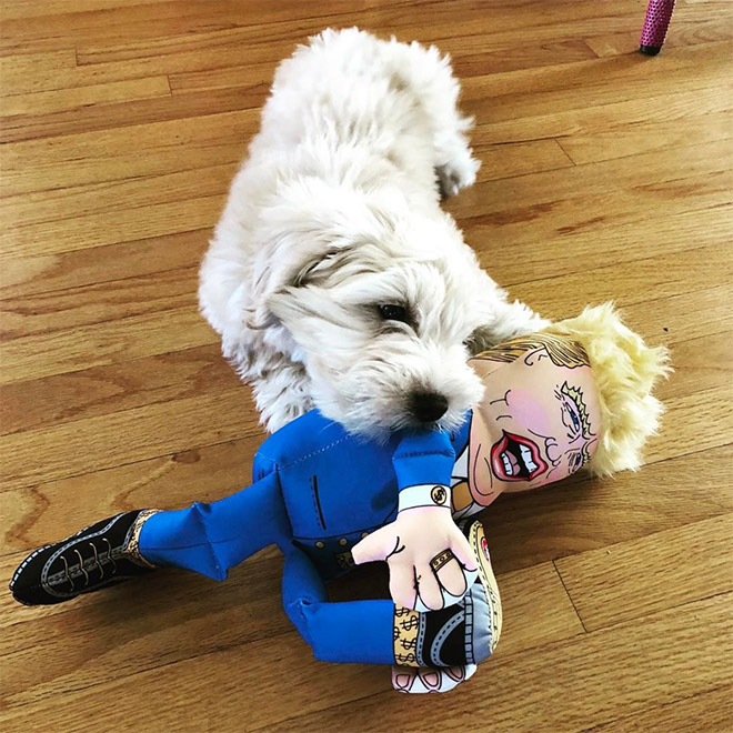 собака с куклой
