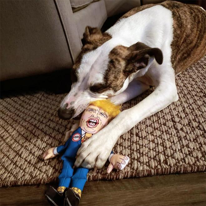 собака с игрушечным трампом