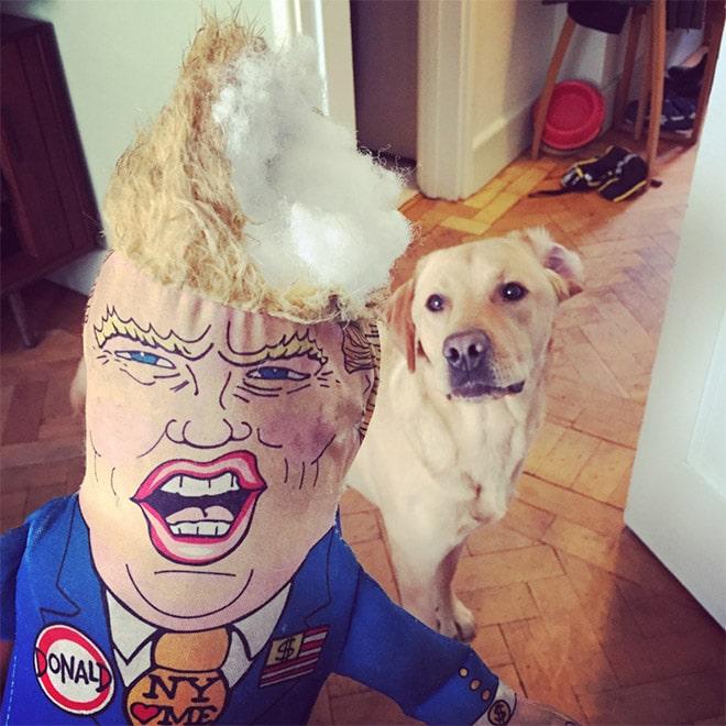 кукла трампа и собака