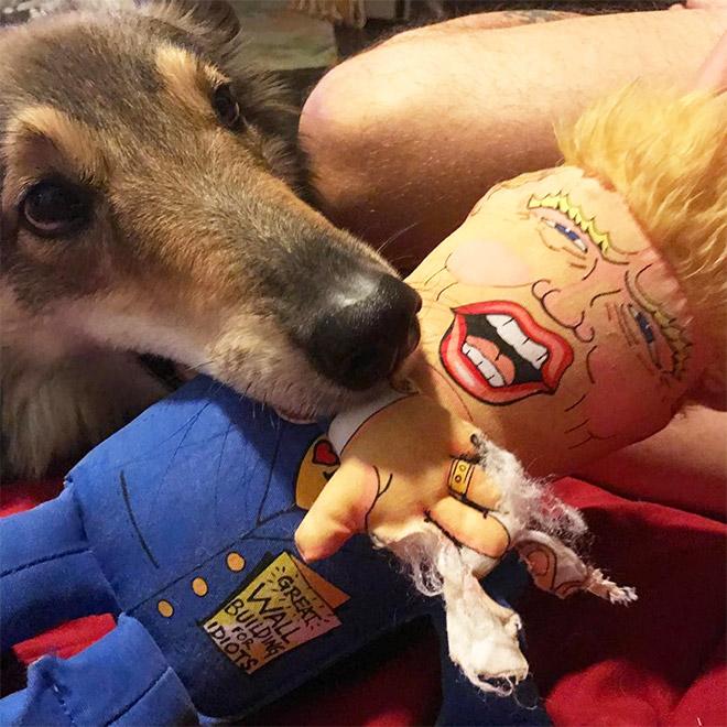 собака с куклой во рту