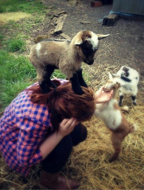 козлята напали на девушку