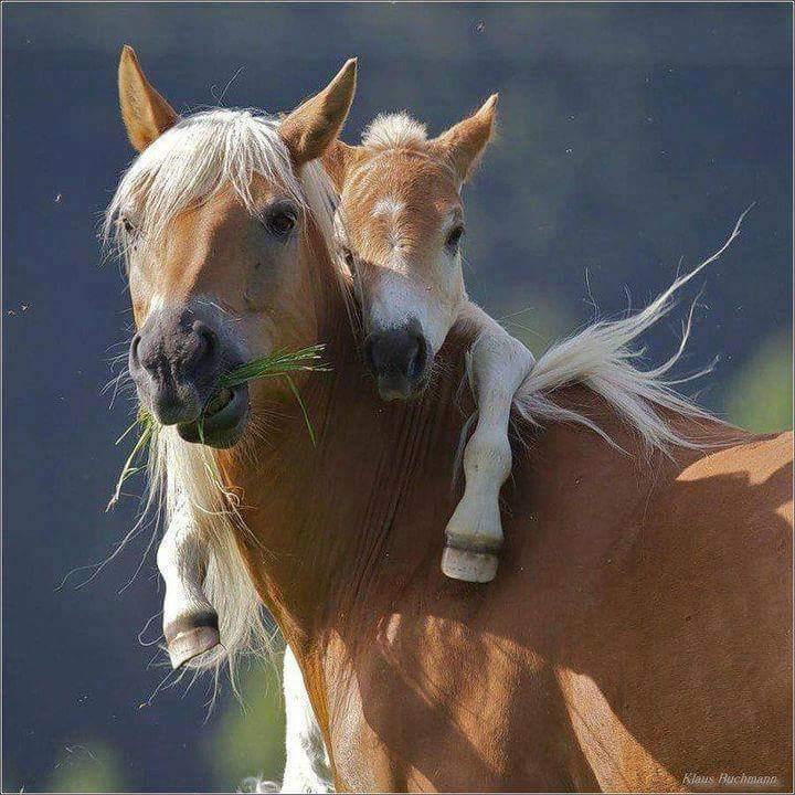 лошадь с жеребенком на спине