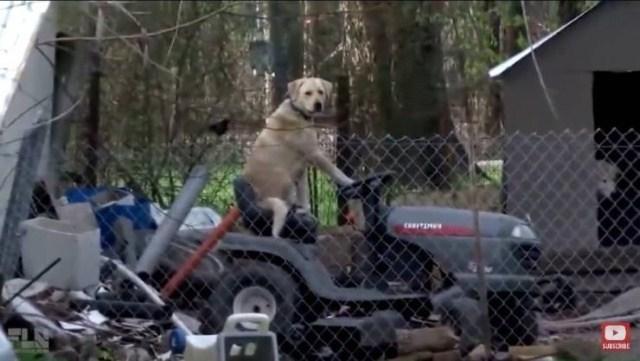 собака сидит за рулем