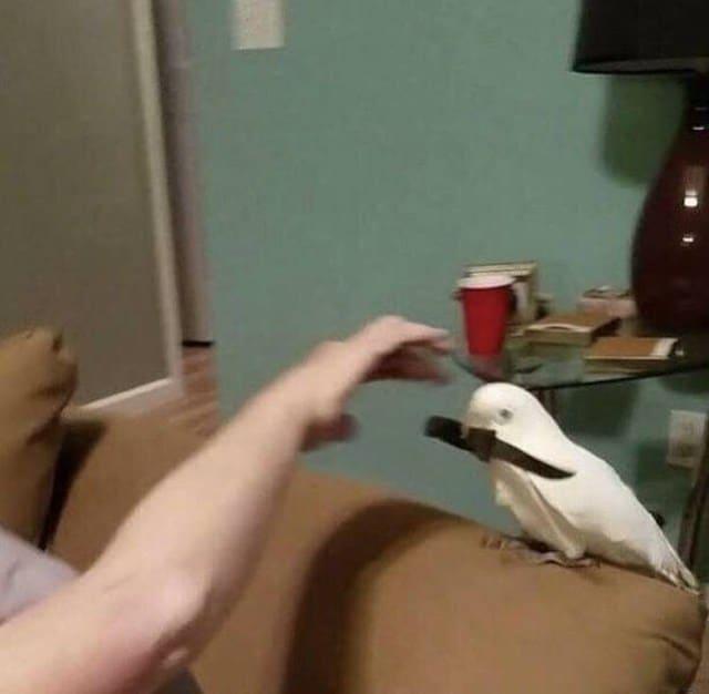 белый попугай с ножом в клюве