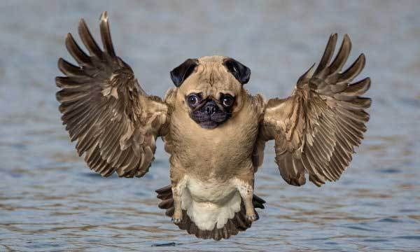 пес с крыльями птицы