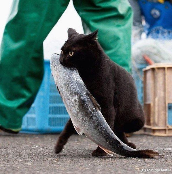 черный кот с рыбой в зубах