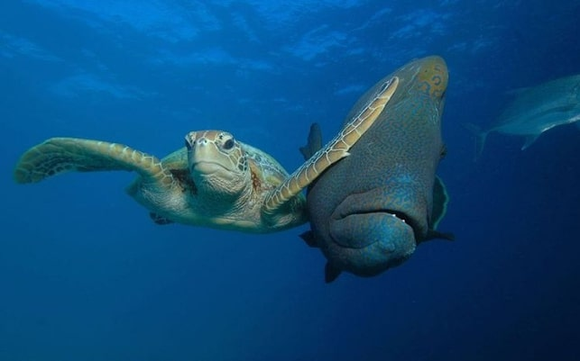 черепаха и рыба под водой