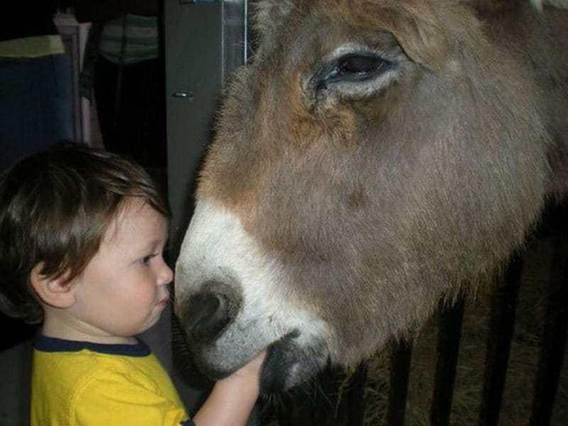 животное и мальчик