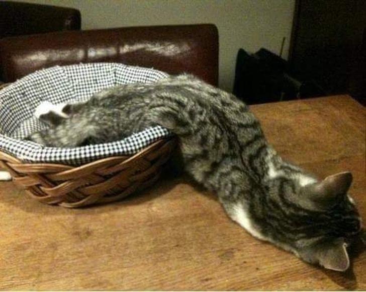 полосатый кот спит в корзинке