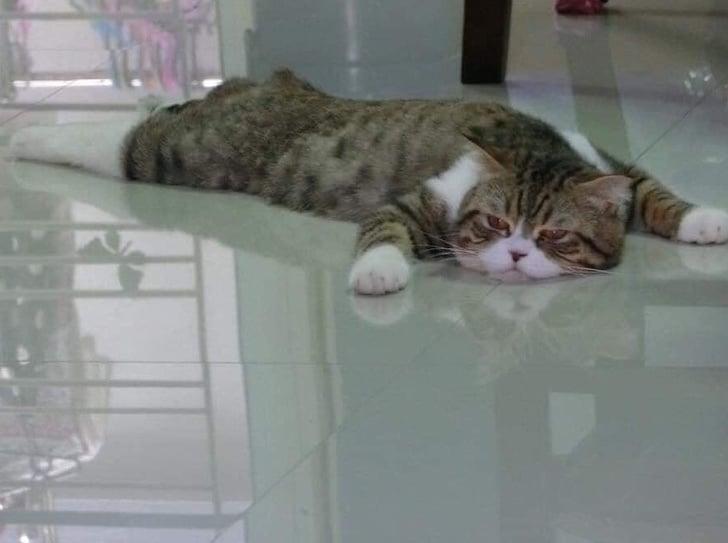 полосатый кот лежит на полу