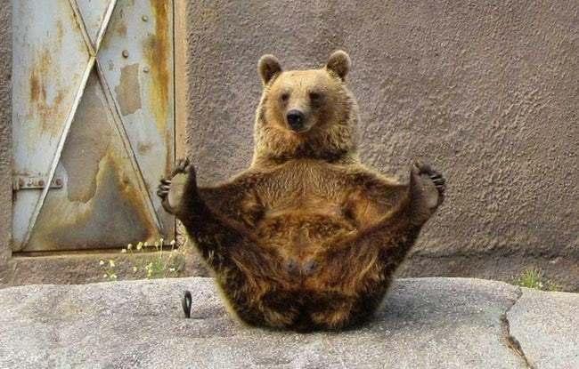 медведь держится за задние лапы