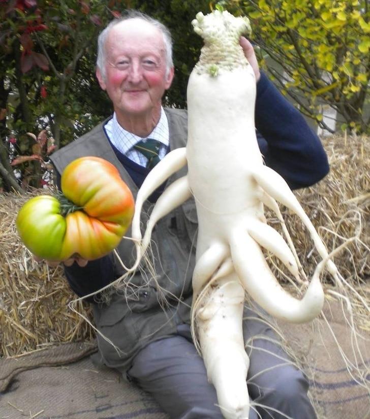 пожилой мужчина с овощами-гигантами