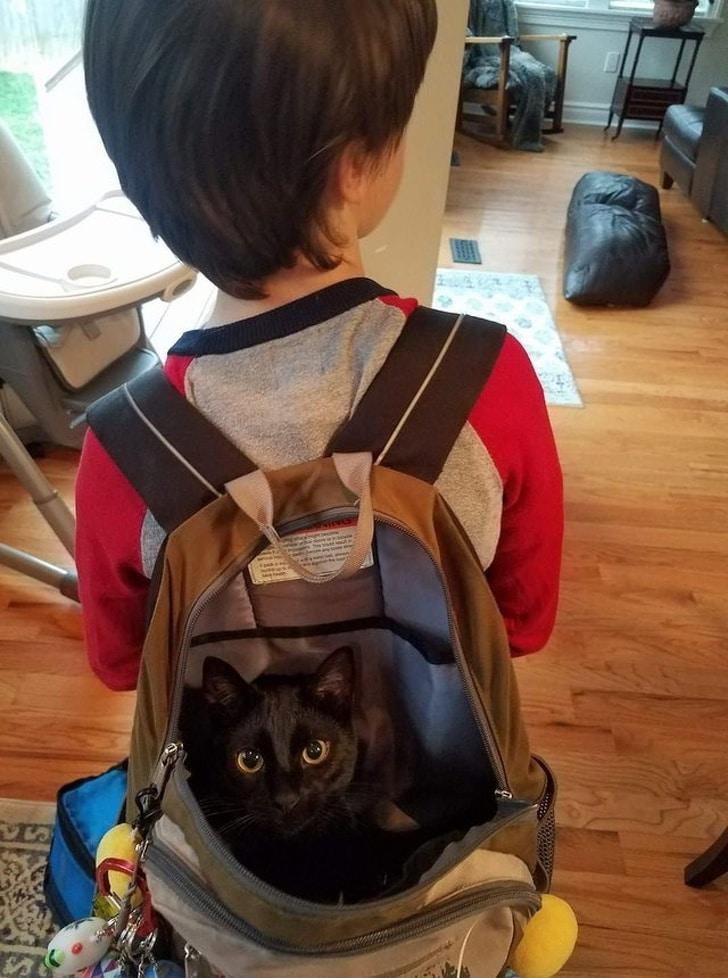 черный кот в рюкзаке на спине у мальчика