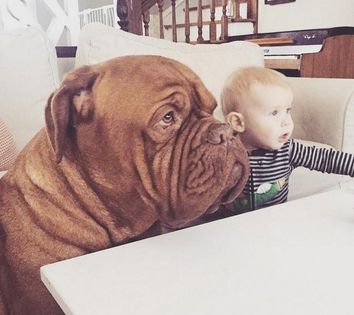 собака и маленький мальчик