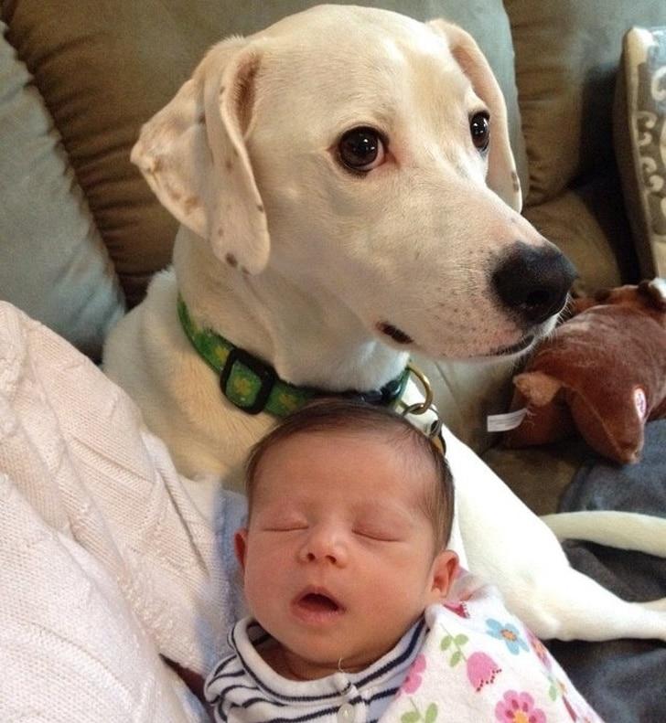 собака и спящий малыш