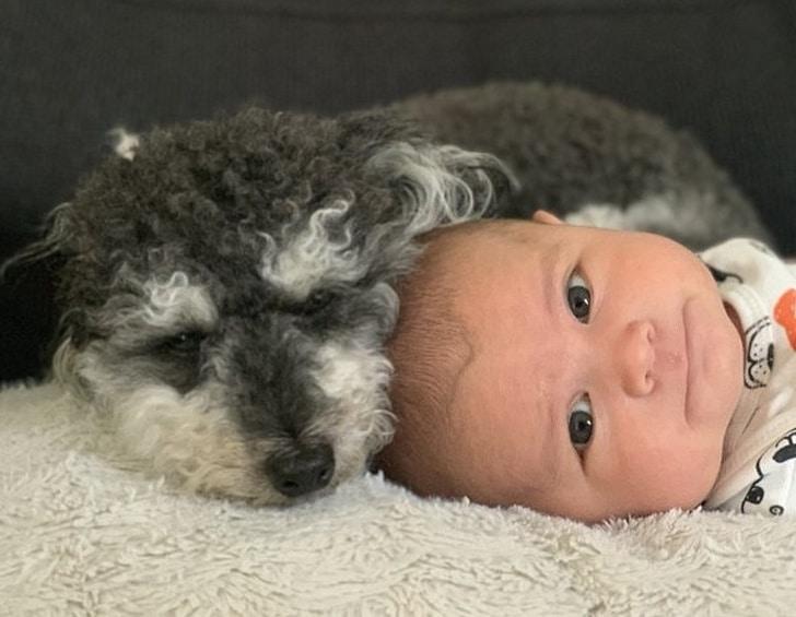 собака спит рядом с ребенком