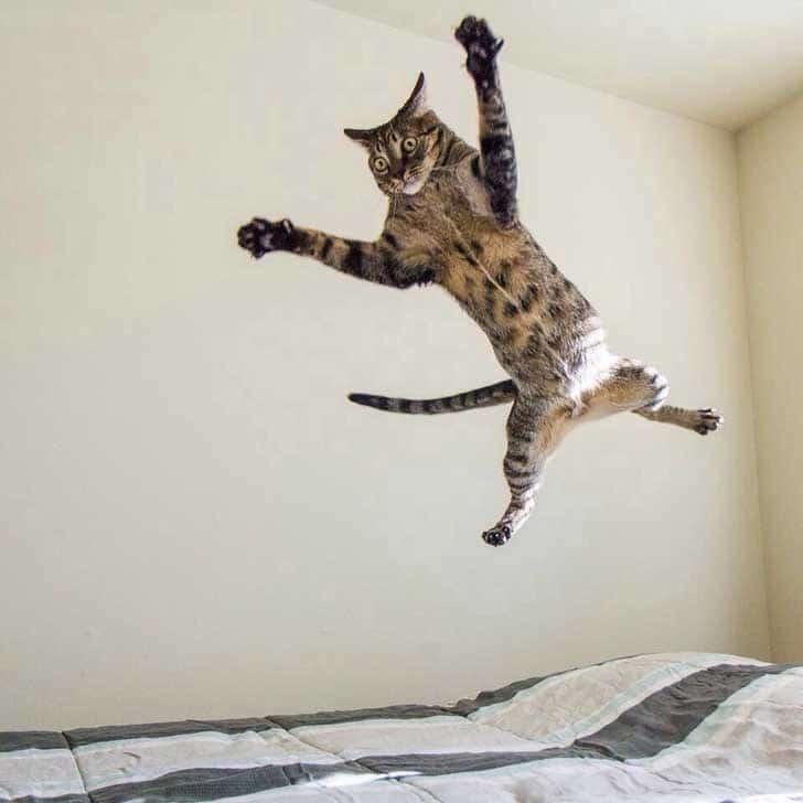кот летает