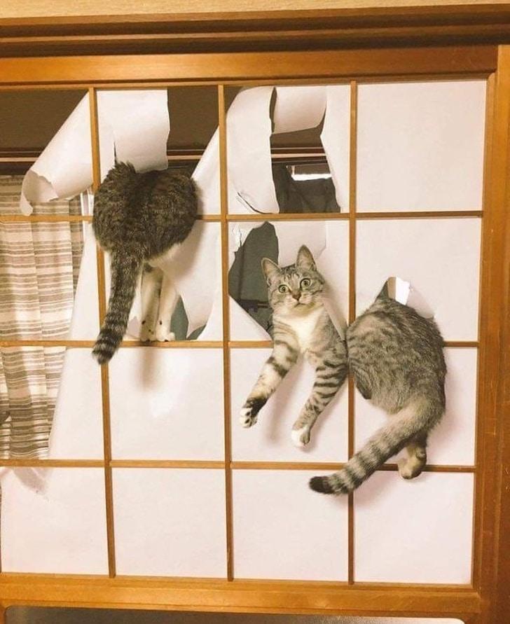 кот и двери