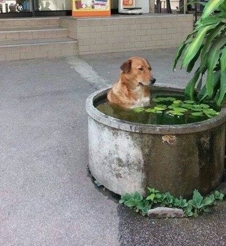 собака сидит в воде