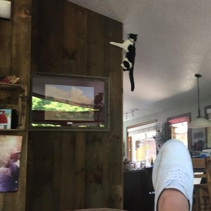 кот висит под потолком
