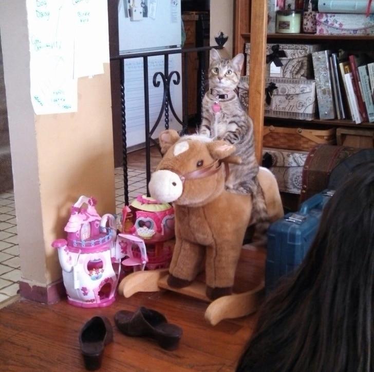 полосатый кот на игрушечной лошадке