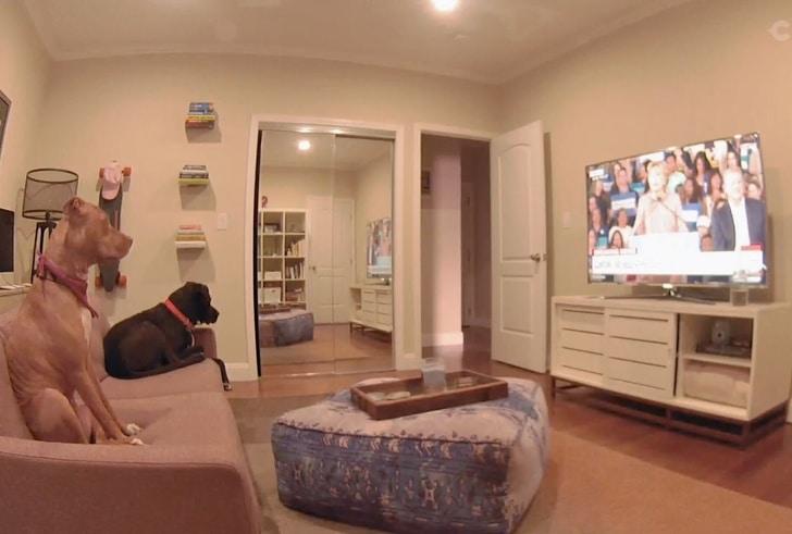 собаки смотрят телевизор