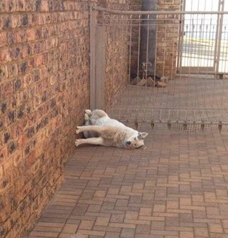 собака сидит у стены