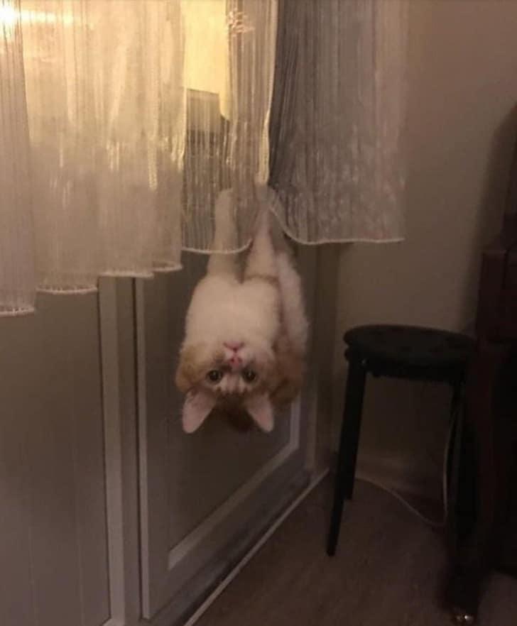кот висит на шторе вниз головой