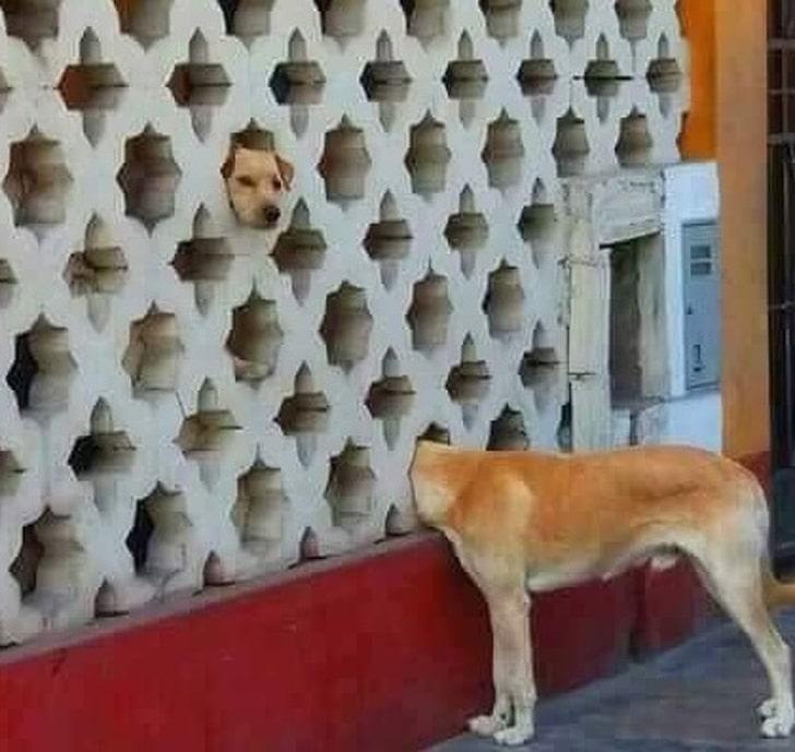 собака головой в заборе