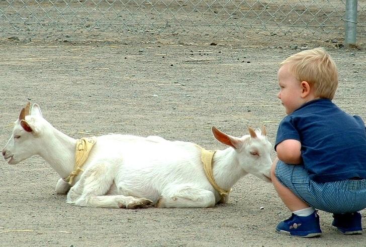ребенок с двумя козлятами