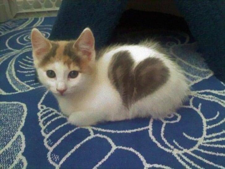 котенок с сердечком на боку