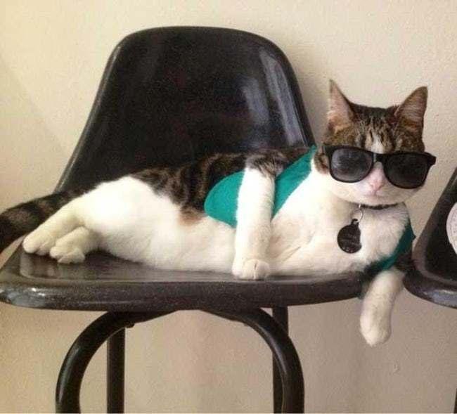 кот в очках на кресле