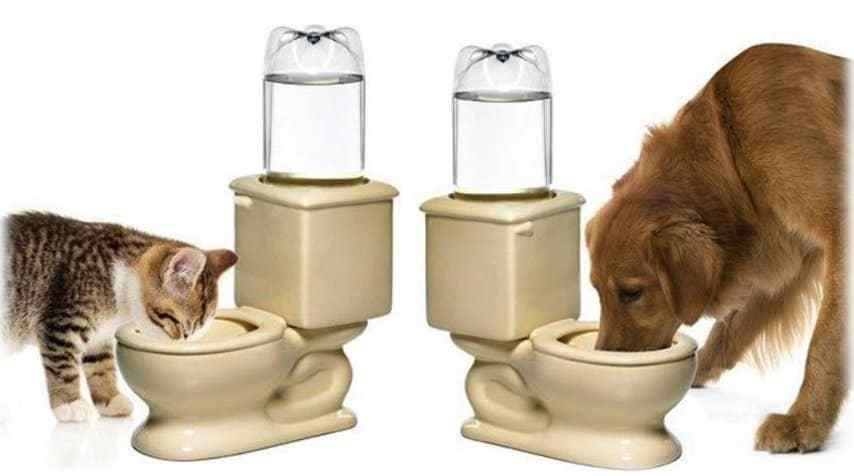 кот и собака пьют из миски в форме унитаза