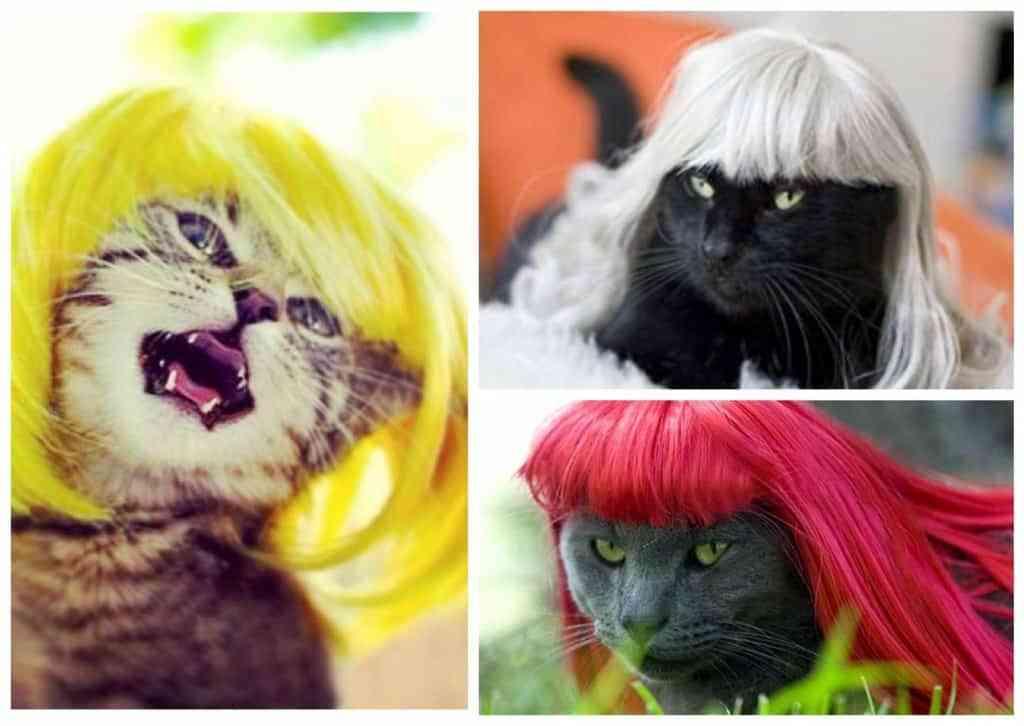 кошки в цветных париках