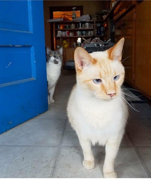 коты у двери
