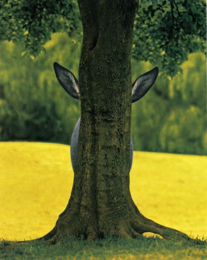 ослик за деревом