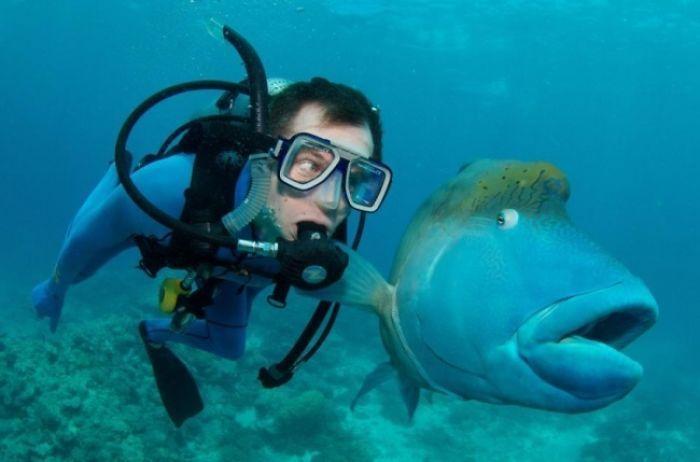 дайвер и рыба