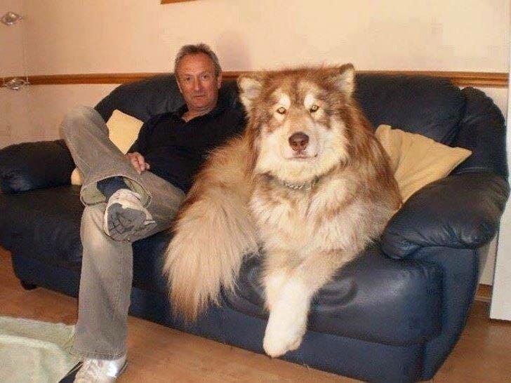 пес с хозяином на диване