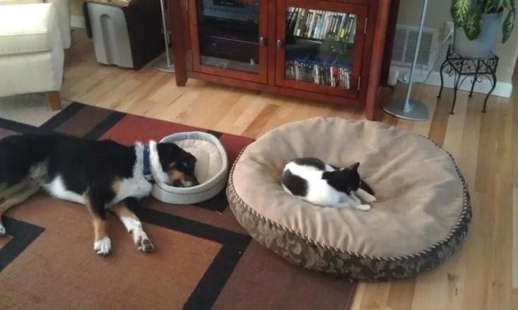кот и собака на лежаках