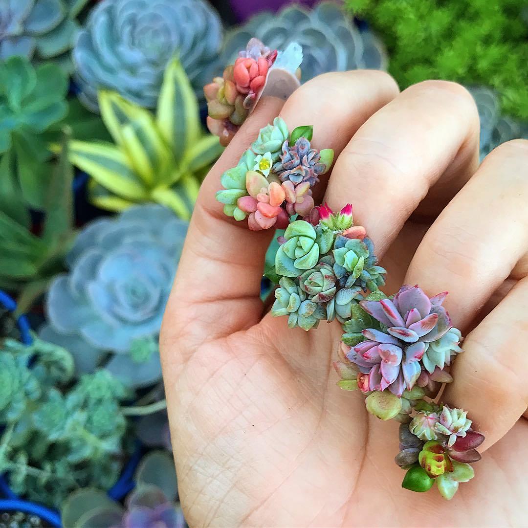 ботанические ногти