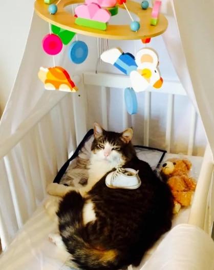 кошка в детской люльке