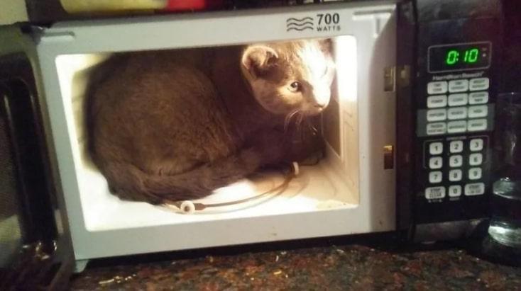 кошка сидит в микроволновке