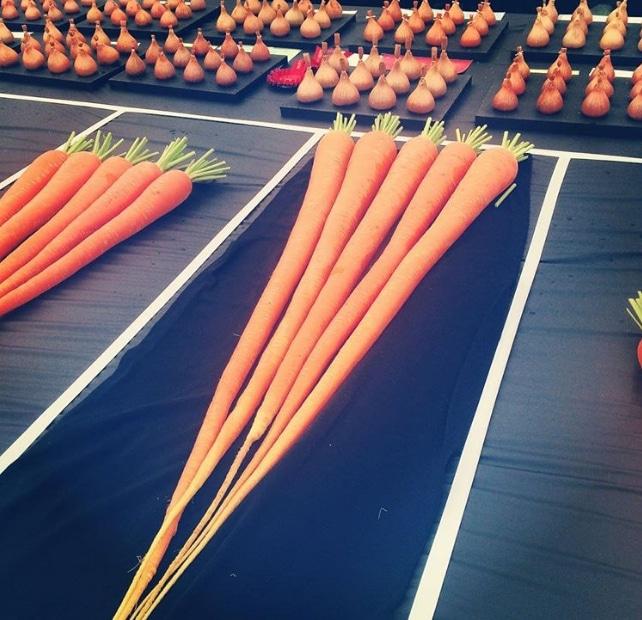 длинная морковь